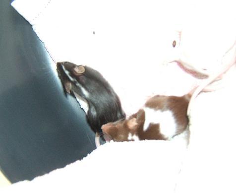 3 ptites souris : Mai, Elki et Lela Margue10