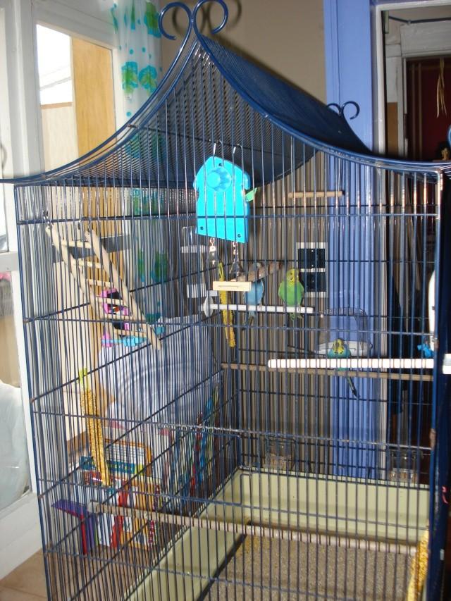 agencement de ma cage  Dsc09415
