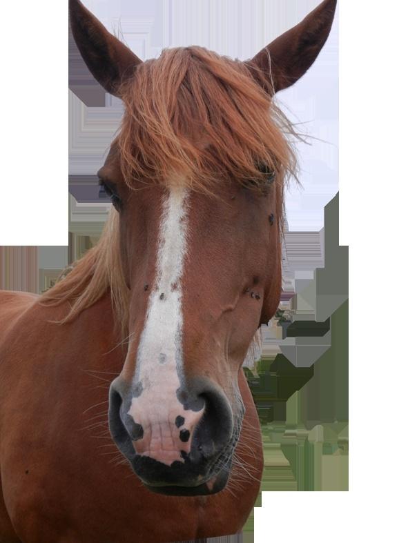 """Nilo """"GRAF"""" - Pagina 2 Cavall11"""