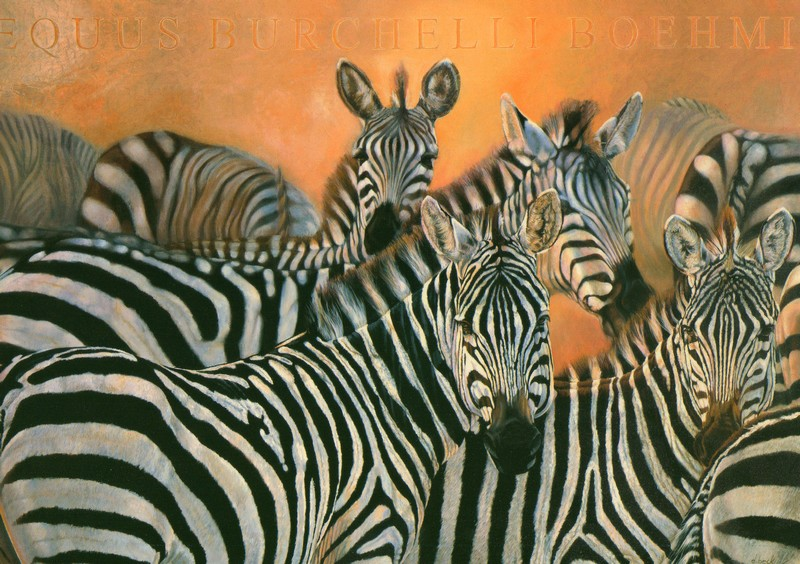 Hommages !!! Zebres10