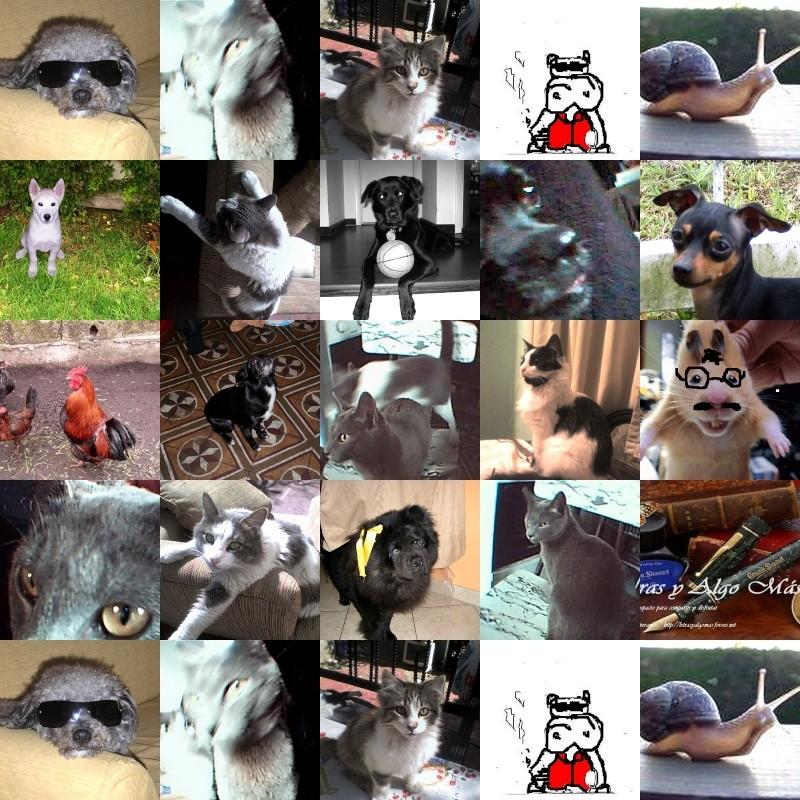 EL ARCA DE NOÉ (honor a las mascotas) +++ DESTACADO OCTUBRE 2013+++ Collag10