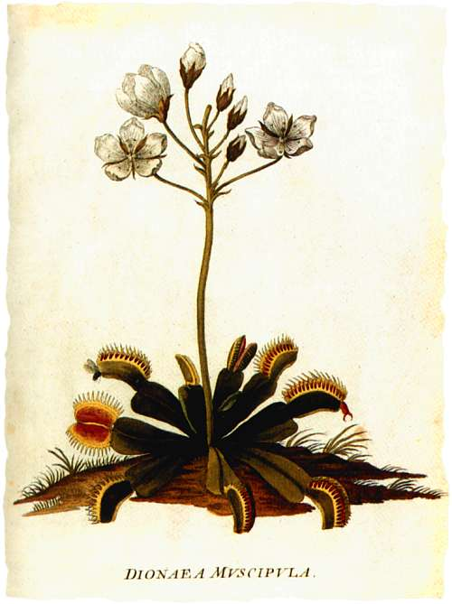 1771 - Dionaea Muscipula 1771_d10