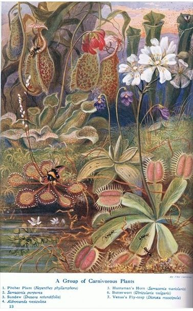 1914 - A group of carnivorous plants Group10