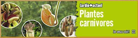 HORNBACH - Plantes carnivores - 5 au 29 septembre 2012 Image110
