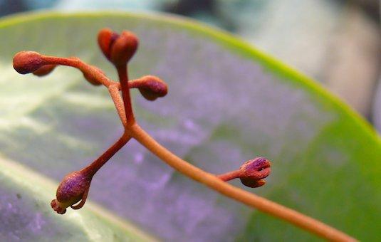 Mon Nepenthes Adnata P1140214
