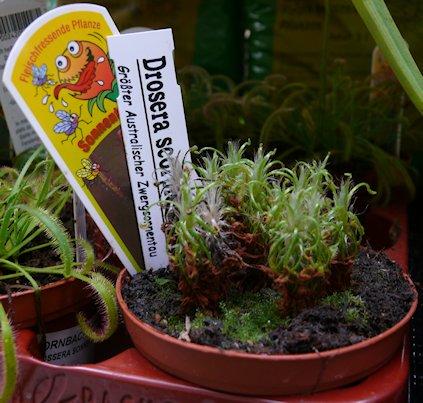 HORNBACH - Plantes carnivores - 5 au 29 septembre 2012 P1140315
