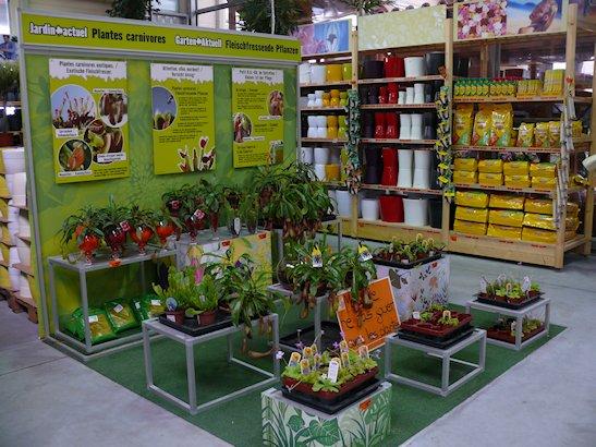 HORNBACH - Plantes carnivores - 5 au 29 septembre 2012 P1140317