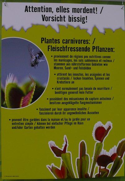 HORNBACH - Plantes carnivores - 5 au 29 septembre 2012 P1140319