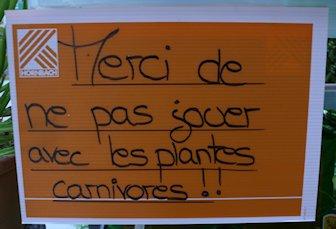 HORNBACH - Plantes carnivores - 5 au 29 septembre 2012 P1140323
