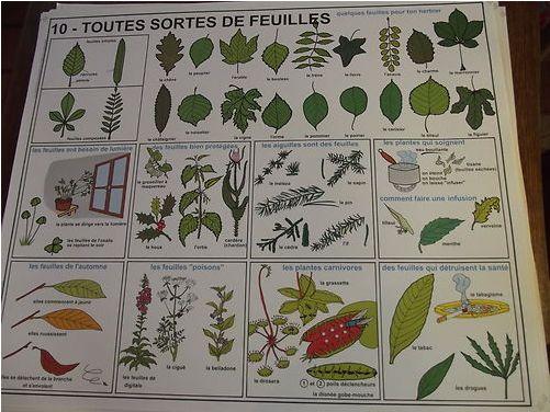 199X - Affiche scolaire Rossignol n°10 - Toutes sortes de feuilles Scolai10