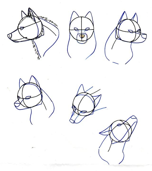 Tuto Comment Dessiner Un Loup 2 Page 1
