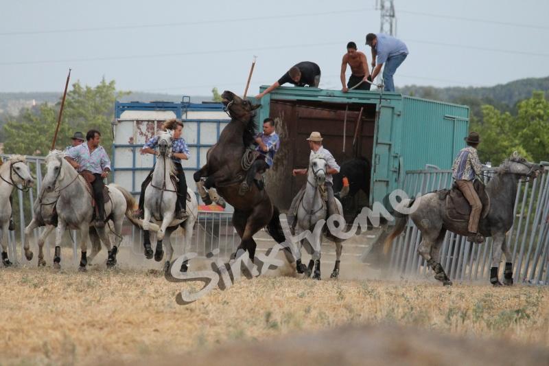 CANAULES 2012 Jump10