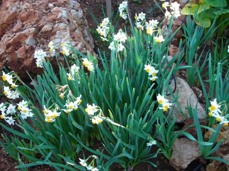 Nuestro jardín de Sa Possessió - Página 3 129_no10