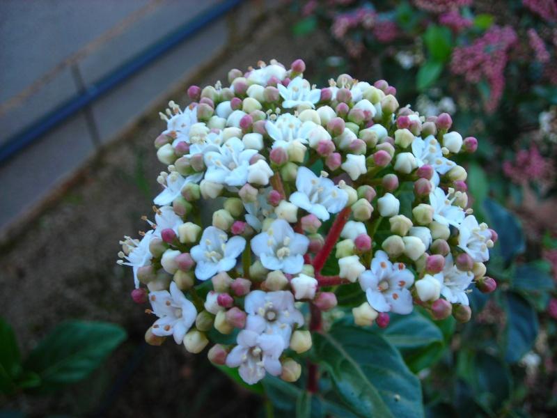 Nuestro jardín de Sa Possessió - Página 3 129_no11