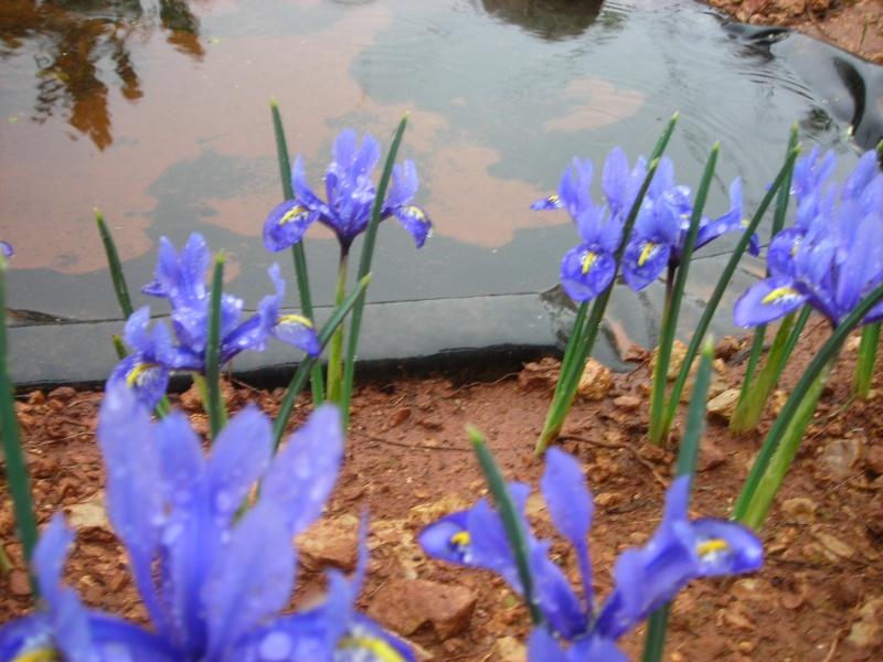 Nuestro jardín de Sa Possessió - Página 3 145_fl10