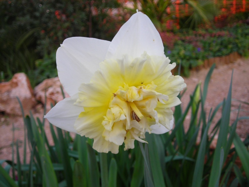 Nuestro jardín de Sa Possessió - Página 3 147_fl10