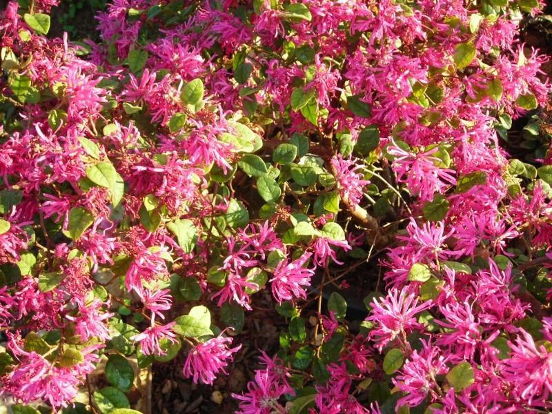 Nuestro jardín de Sa Possessió - Página 3 148_fl14