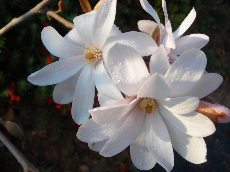 Nuestro jardín de Sa Possessió - Página 3 148_fl15