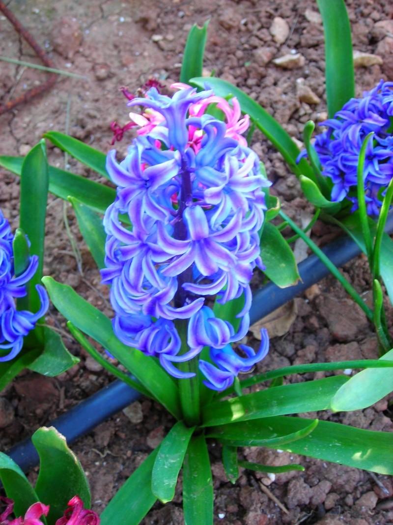 Nuestro jardín de Sa Possessió - Página 3 151_fl10