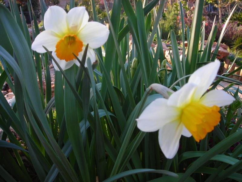 Nuestro jardín de Sa Possessió - Página 3 152_so10