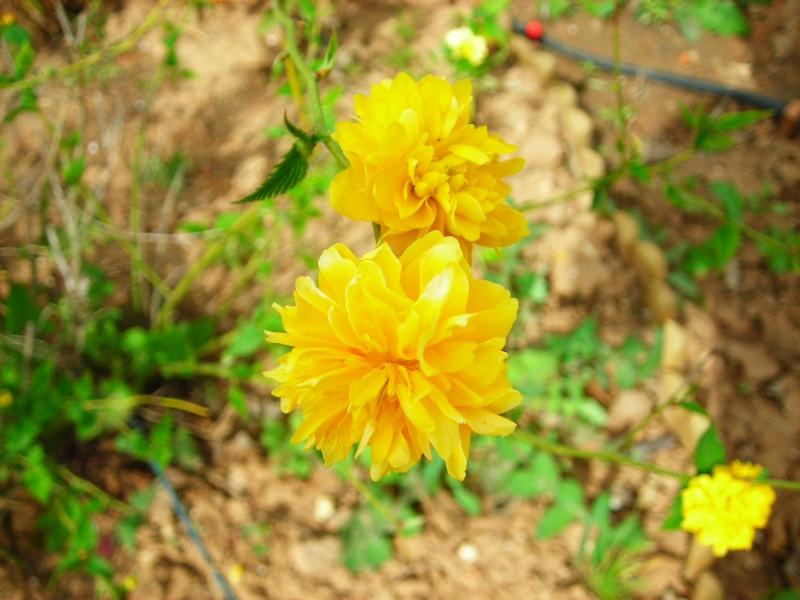 Nuestro jardín de Sa Possessió - Página 3 154_fl10
