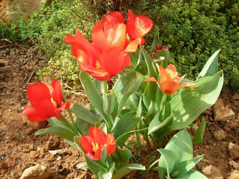 Nuestro jardín de Sa Possessió - Página 3 154_fl14