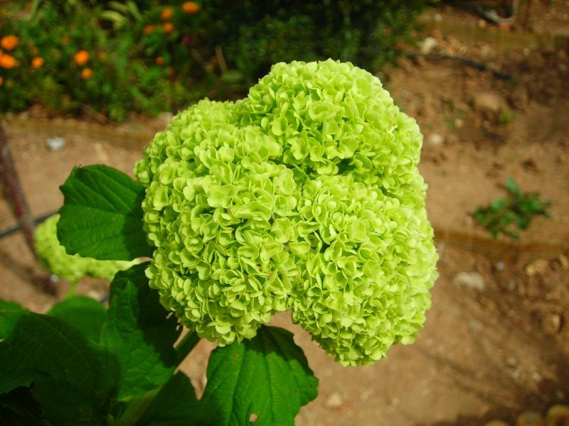 Nuestro jardín de Sa Possessió - Página 3 154_fl15