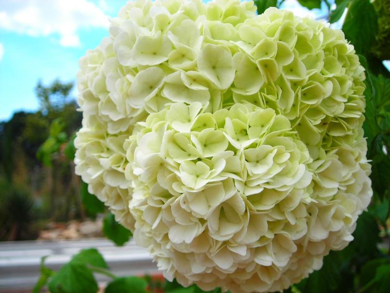 Nuestro jardín de Sa Possessió - Página 3 155_fl16