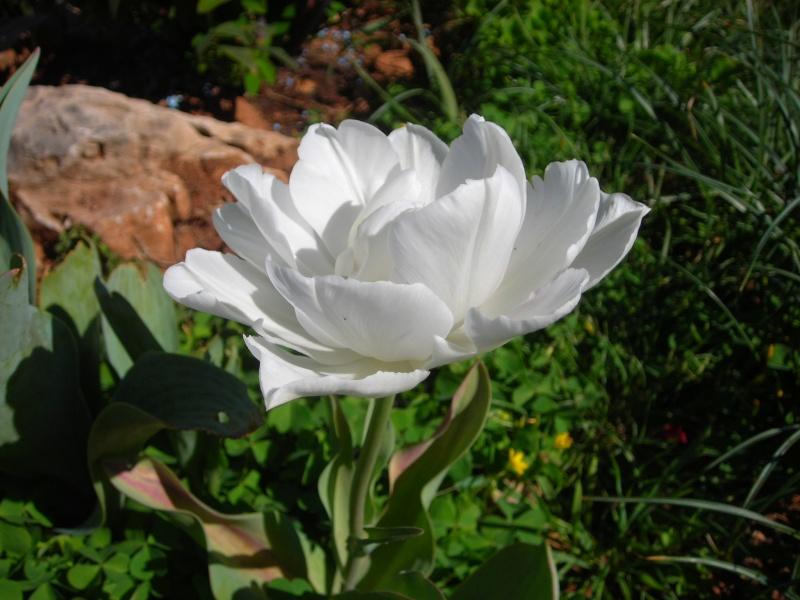 Nuestro jardín de Sa Possessió - Página 3 158_pe11