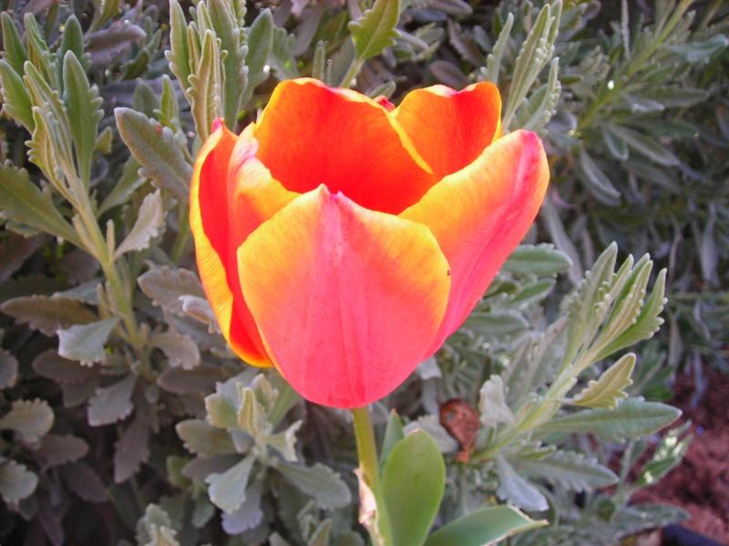 Nuestro jardín de Sa Possessió - Página 3 162_ir11