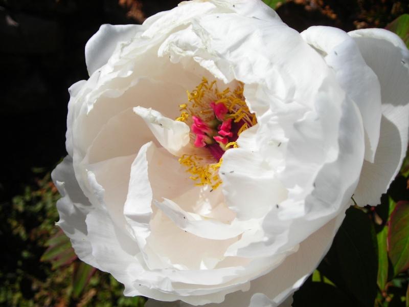 Nuestro jardín de Sa Possessió - Página 3 163_ir10