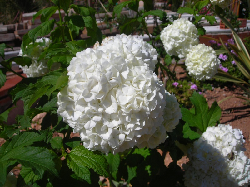 Nuestro jardín de Sa Possessió - Página 3 163_ir11