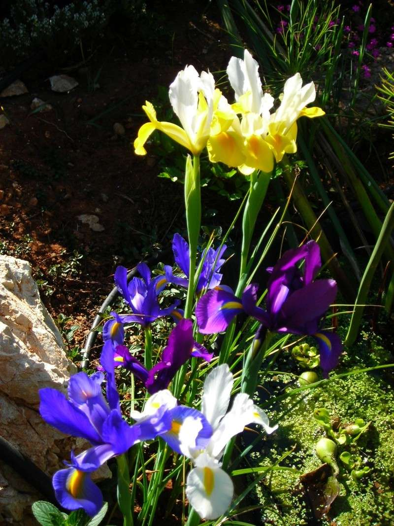 Nuestro jardín de Sa Possessió - Página 3 164_ir10