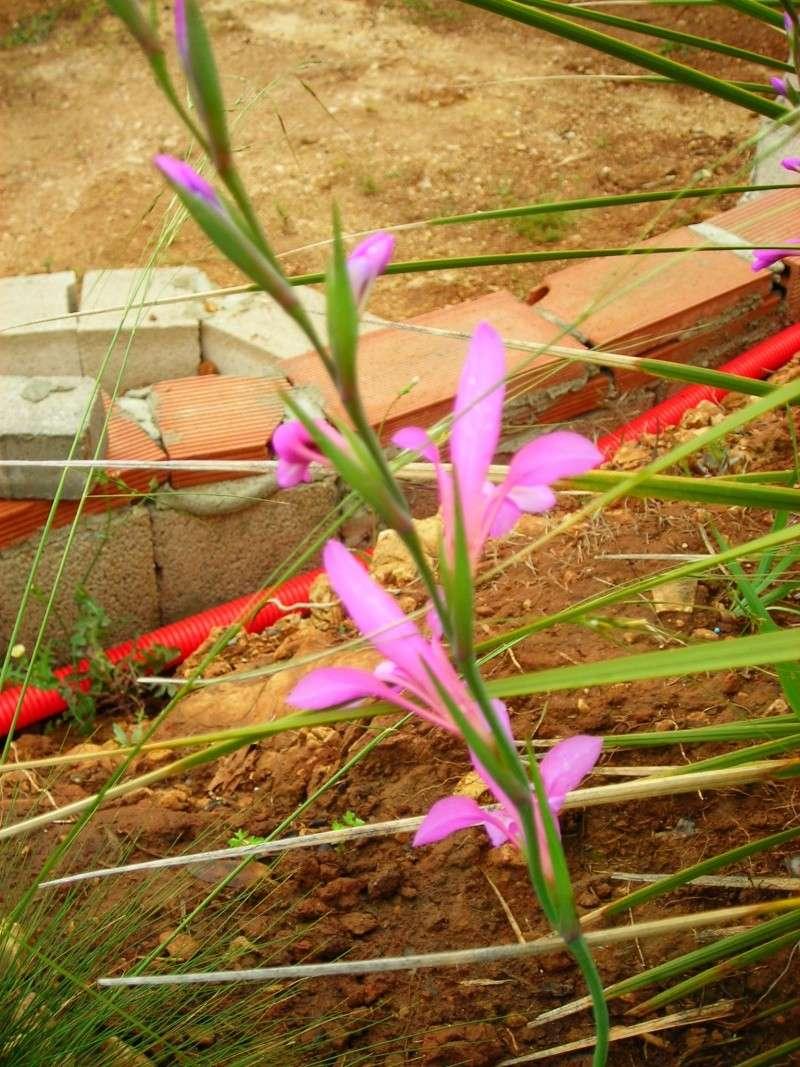 Nuestro jardín de Sa Possessió - Página 2 166_ro10