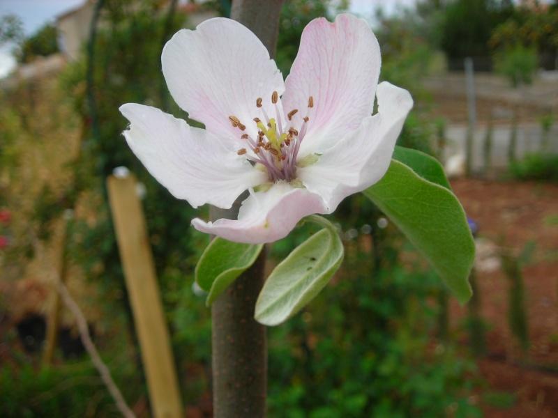 Nuestro jardín de Sa Possessió - Página 3 166_ro12