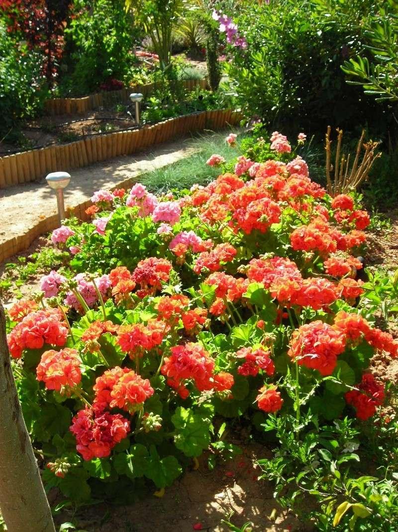 Nuestro jardín de Sa Possessió - Página 2 172_fl10