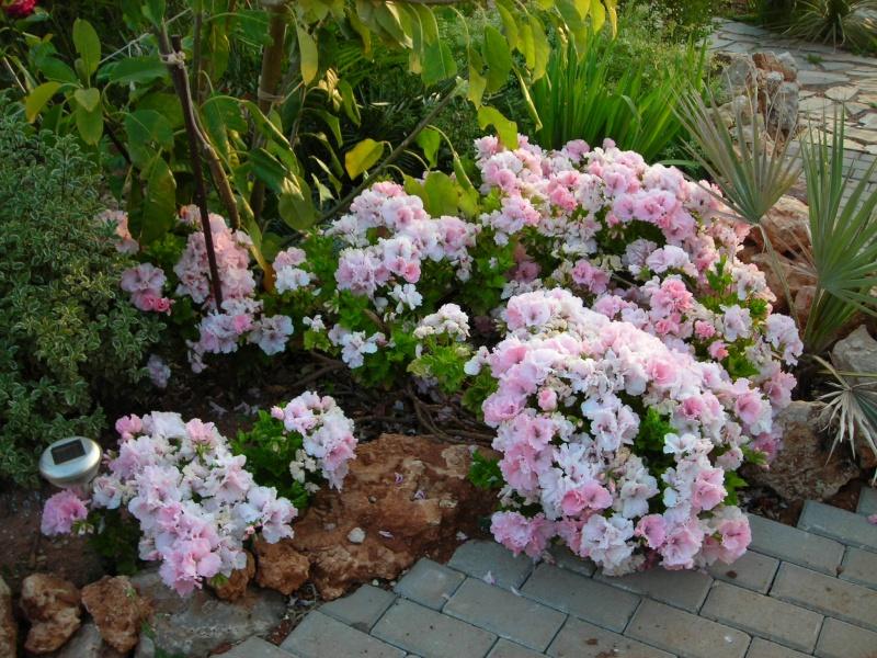 Nuestro jardín de Sa Possessió - Página 2 173_pl10