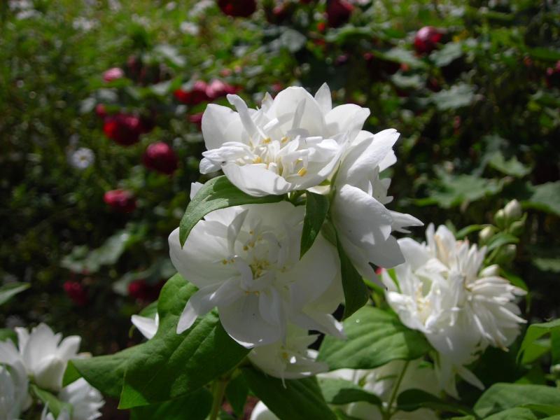 Nuestro jardín de Sa Possessió - Página 3 173_pl21