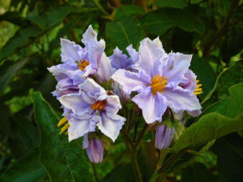 Nuestro jardín de Sa Possessió - Página 3 173_pl23