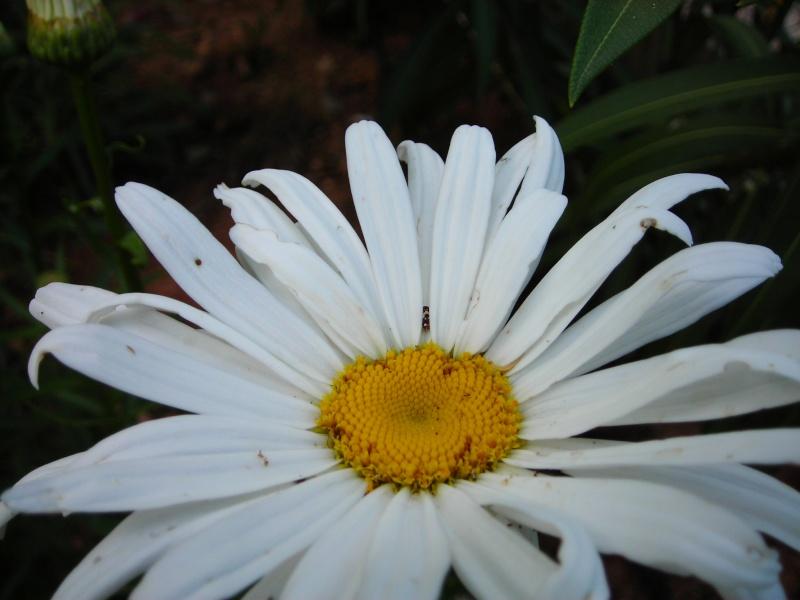 Nuestro jardín de Sa Possessió - Página 3 180_be10