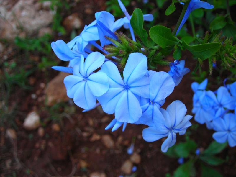 Nuestro jardín de Sa Possessió - Página 3 180_be11
