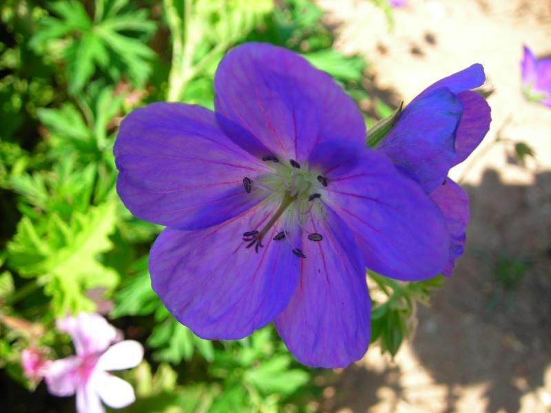 Nuestro jardín de Sa Possessió - Página 2 181_ne11