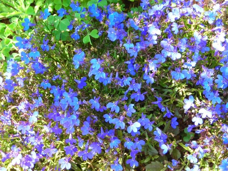 Nuestro jardín de Sa Possessió - Página 3 181_ne15