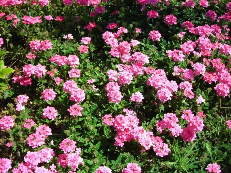Nuestro jardín de Sa Possessió - Página 3 181_ne18
