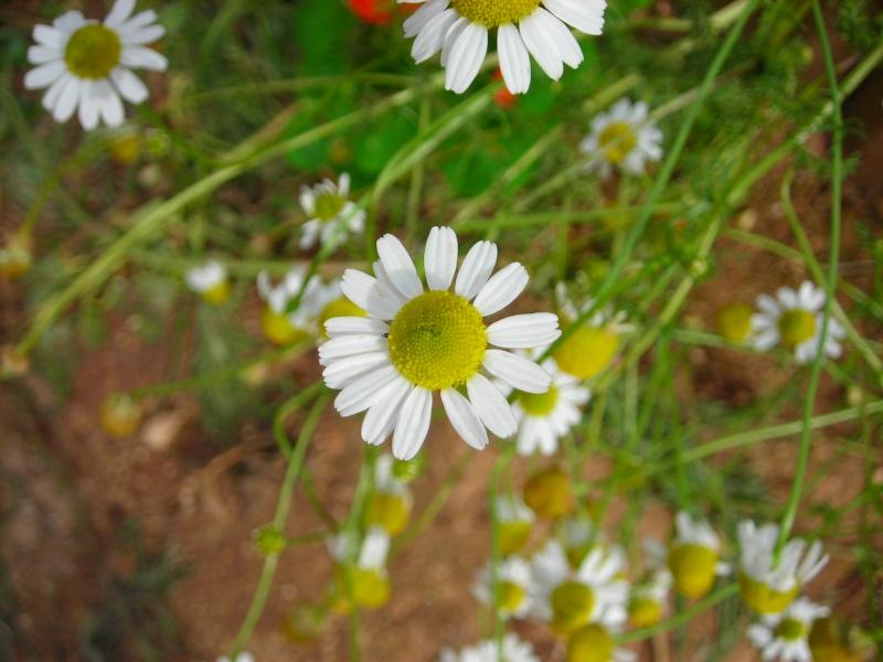 Nuestro jardín de Sa Possessió - Página 3 182_ho14
