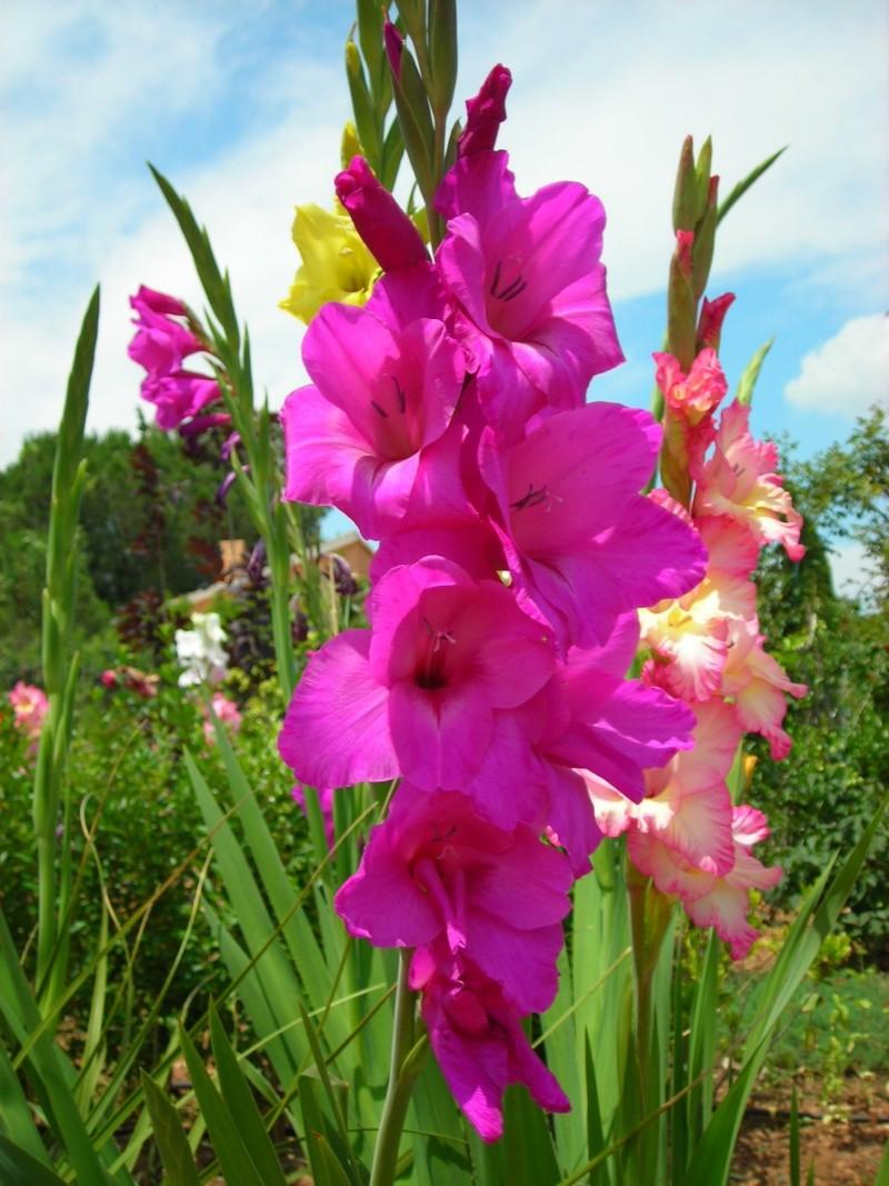 Nuestro jardín de Sa Possessió - Página 2 183_gl11