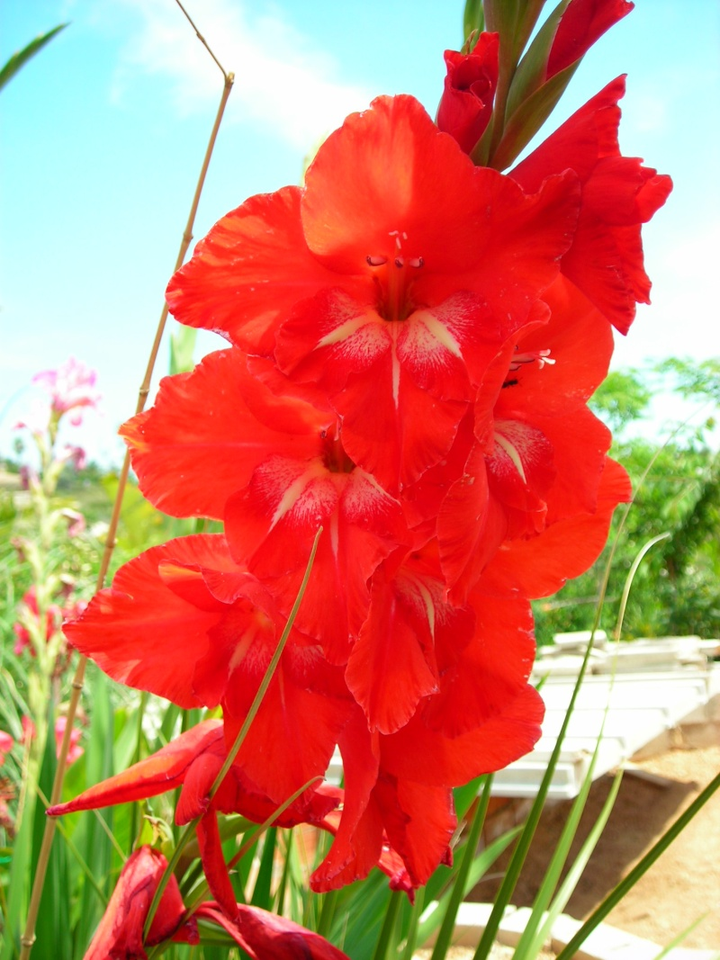 Nuestro jardín de Sa Possessió - Página 2 183_gl12