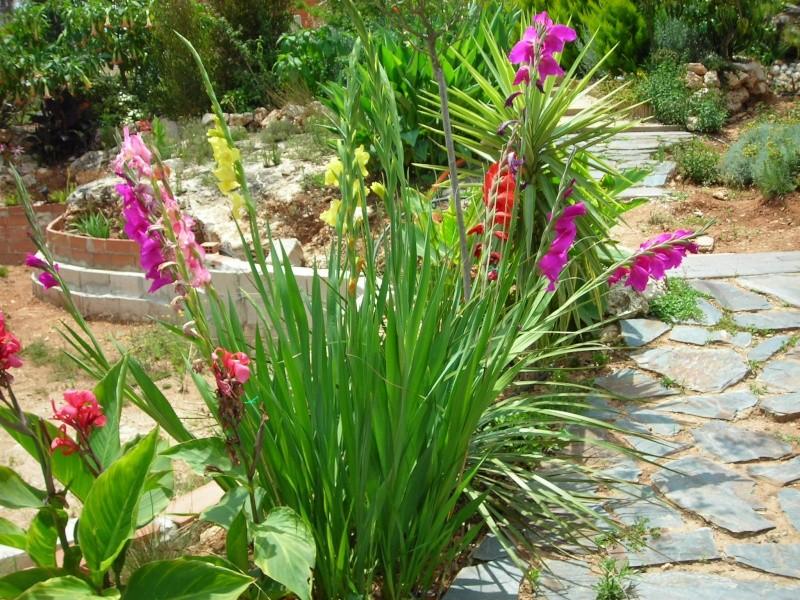 Nuestro jardín de Sa Possessió - Página 2 183_gl13