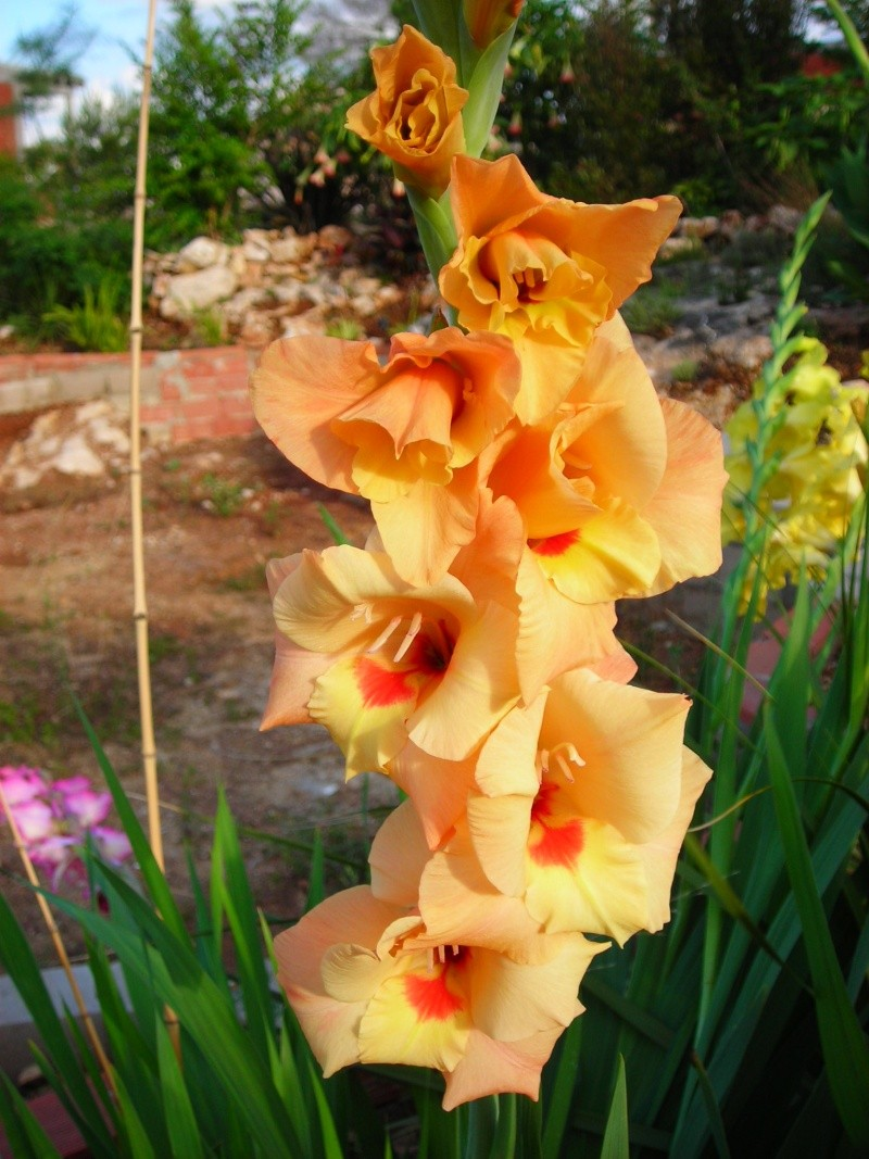Nuestro jardín de Sa Possessió - Página 2 184_gl11