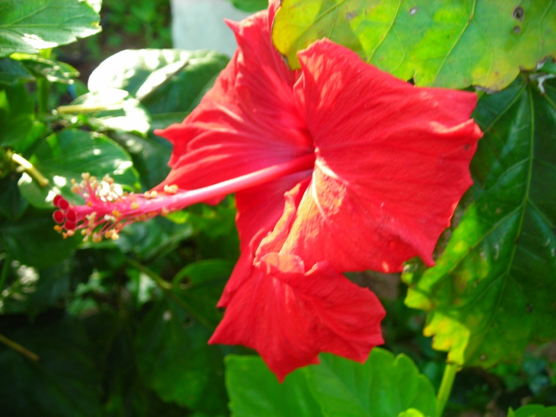 Nuestro jardín de Sa Possessió - Página 3 184_gl12